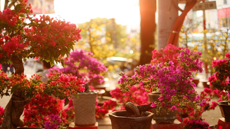 floral bg